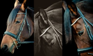 equestrian photography in Nottingham